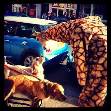This is the good giraffe, he goes about dressed like a giraffe, doing good deeds. Thats him chatting with some dogs
